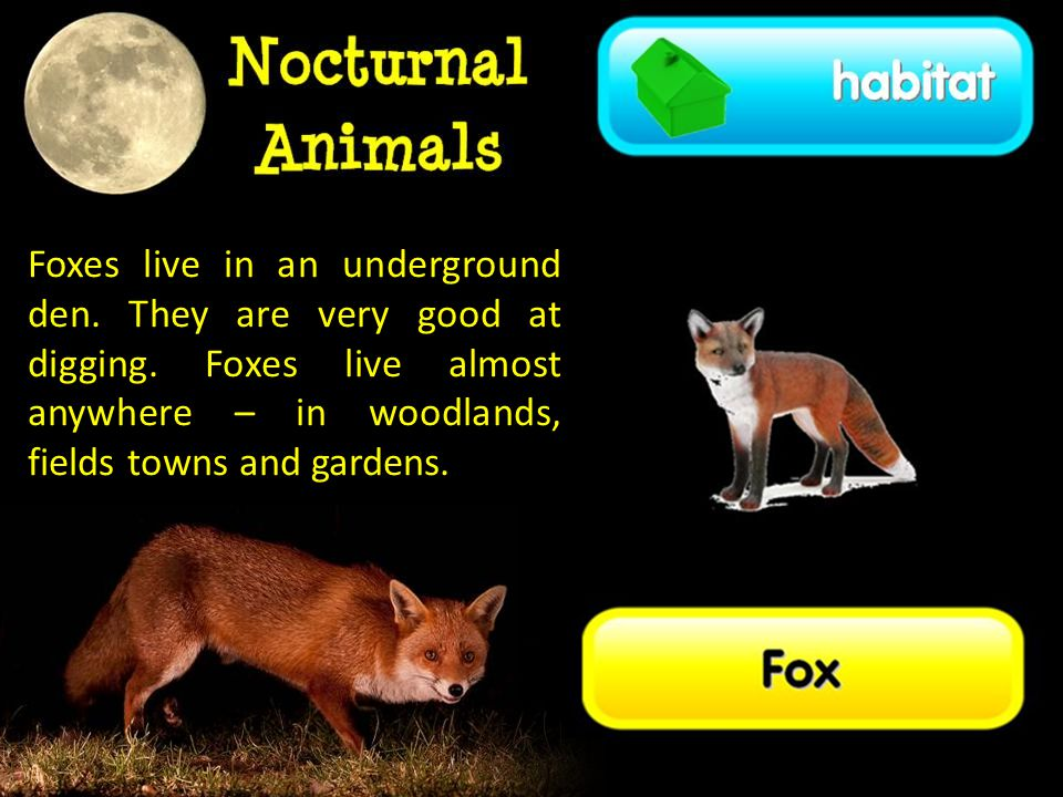 Foxes live in an underground den.They are very good at digging.