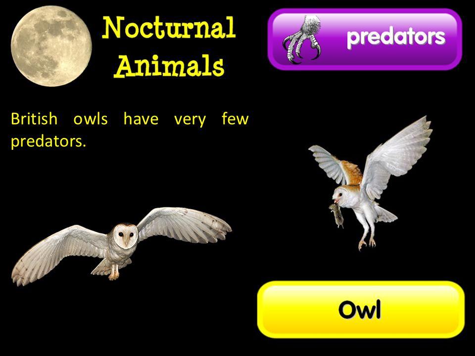 British owls have very few predators.