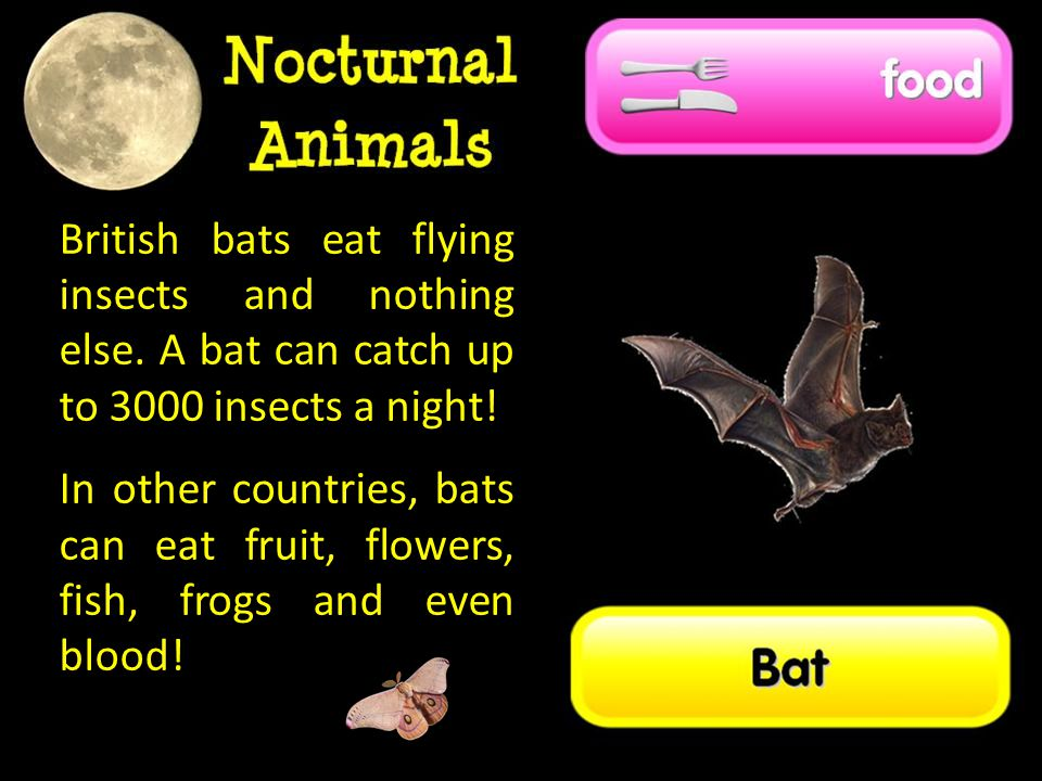 British bats eat flying insects and nothing else.A bat can catch up to 3000 insects a night.