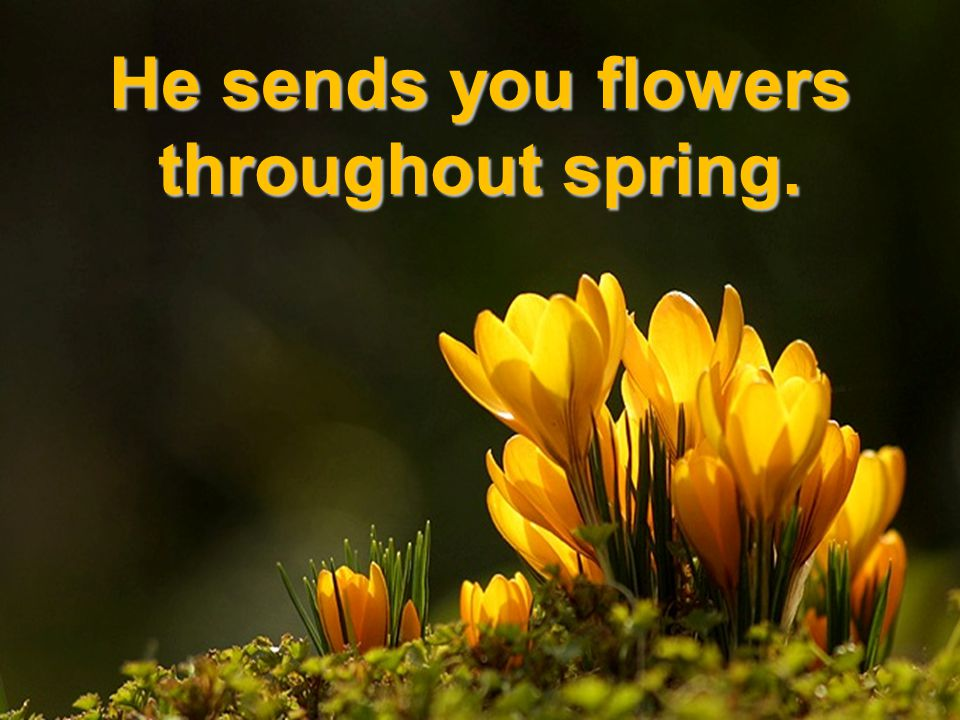 He sends you flowers throughout spring.