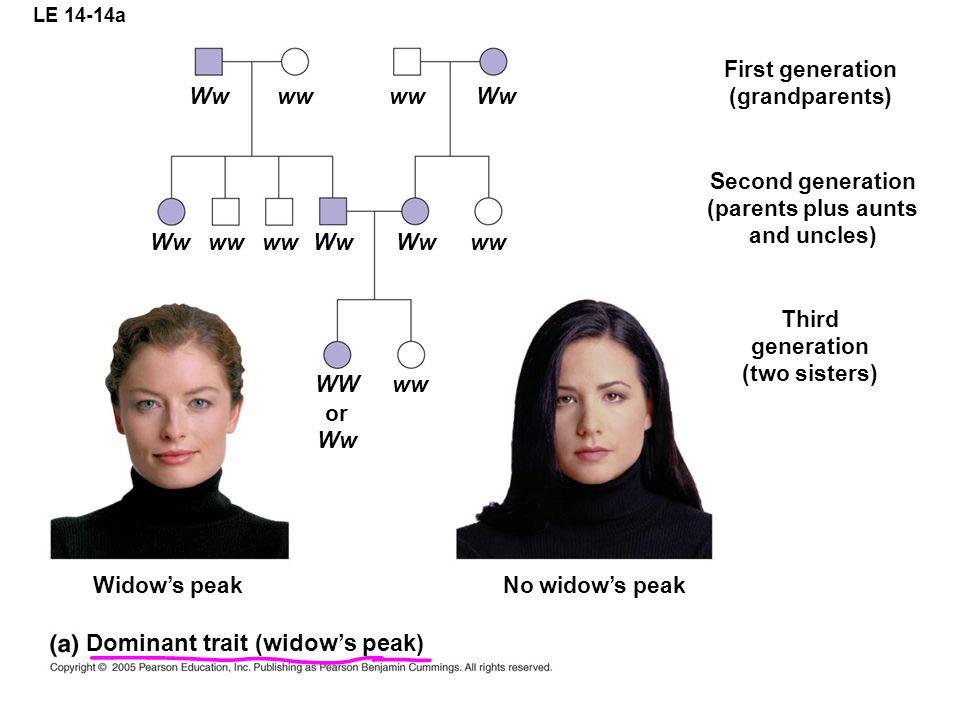 LE 14-14a Wwww Ww wwWwww Ww WWww or Ww No widows peak Third generation (two sisters) Widows peak Second generation (parents plus aunts and uncles) Fir