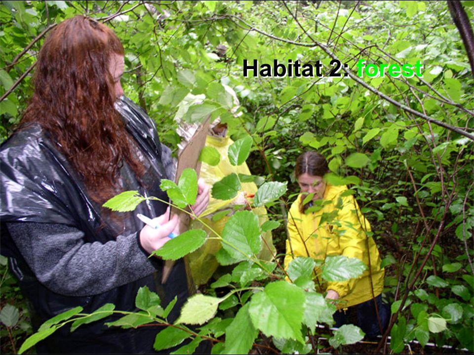 Habitat 2: forest