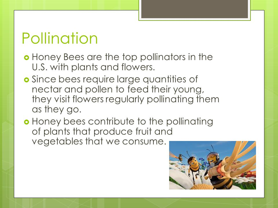 Pollination Honey Bees are the top pollinators in the U.S.