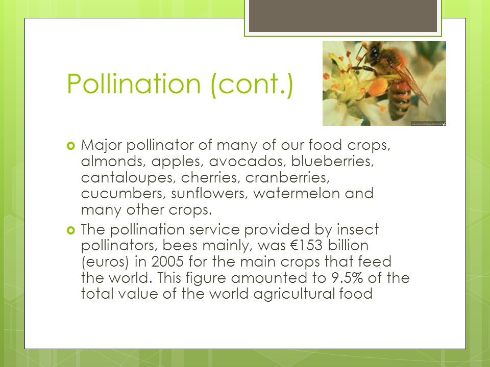 Pollination (cont.) Major pollinator of many of our food crops, almonds, apples, avocados, blueberries, cantaloupes, cherries, cranberries, cucumbers, sunflowers, watermelon and many other crops.