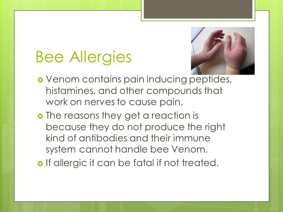 Bee Allergies Venom contains pain inducing peptides, histamines, and other compounds that work on nerves to cause pain.