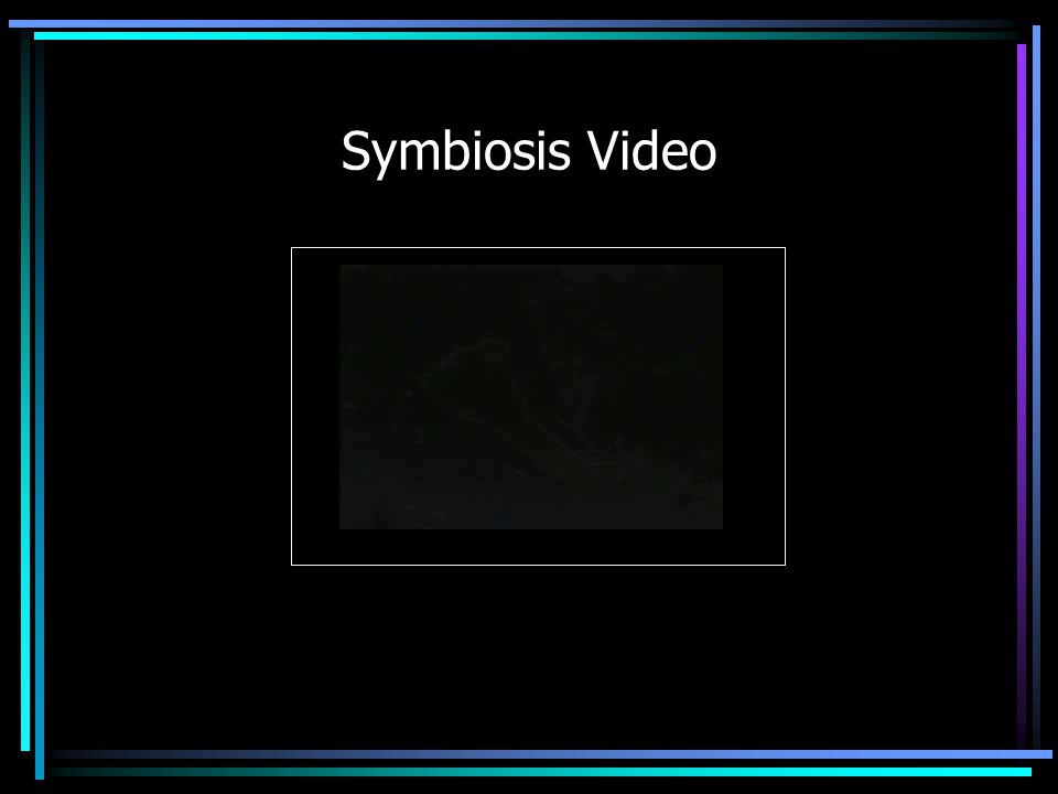 Symbiosis Video