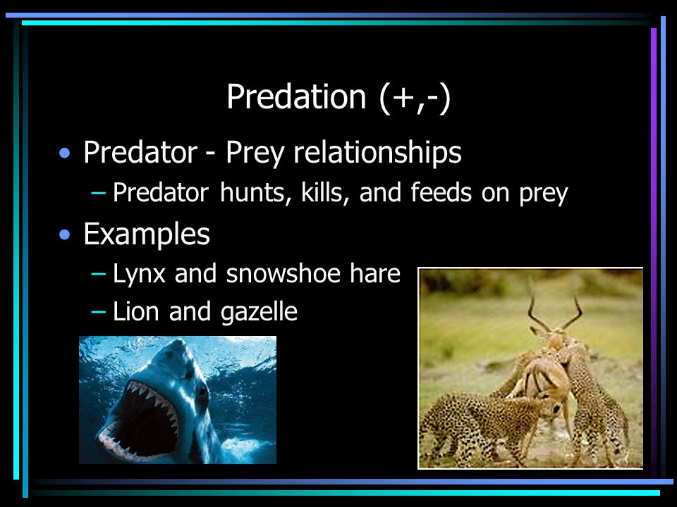 Predation (+,-) Predator - Prey relationships –Predator hunts, kills, and feeds on prey Examples –Lynx and snowshoe hare –Lion and gazelle