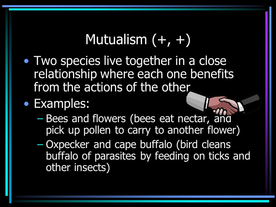 Mutualism (+, +) Two species live together in a close relationship where each one benefits from the actions of the other Examples: –Bees and flowers (bees eat nectar, and pick up pollen to carry to another flower) –Oxpecker and cape buffalo (bird cleans buffalo of parasites by feeding on ticks and other insects)