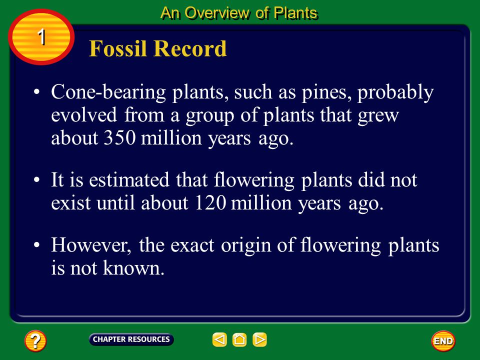 Most animals have bones or other hard parts that can fossilize. Plants usually decay before they become fossilized. Fossil Record An Overview of Plant