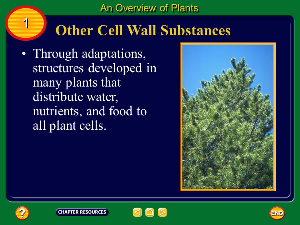Cells of some plants secrete other substances into the cellulose that make the cell wall even stronger. Other Cell Wall Substances An Overview of Plan
