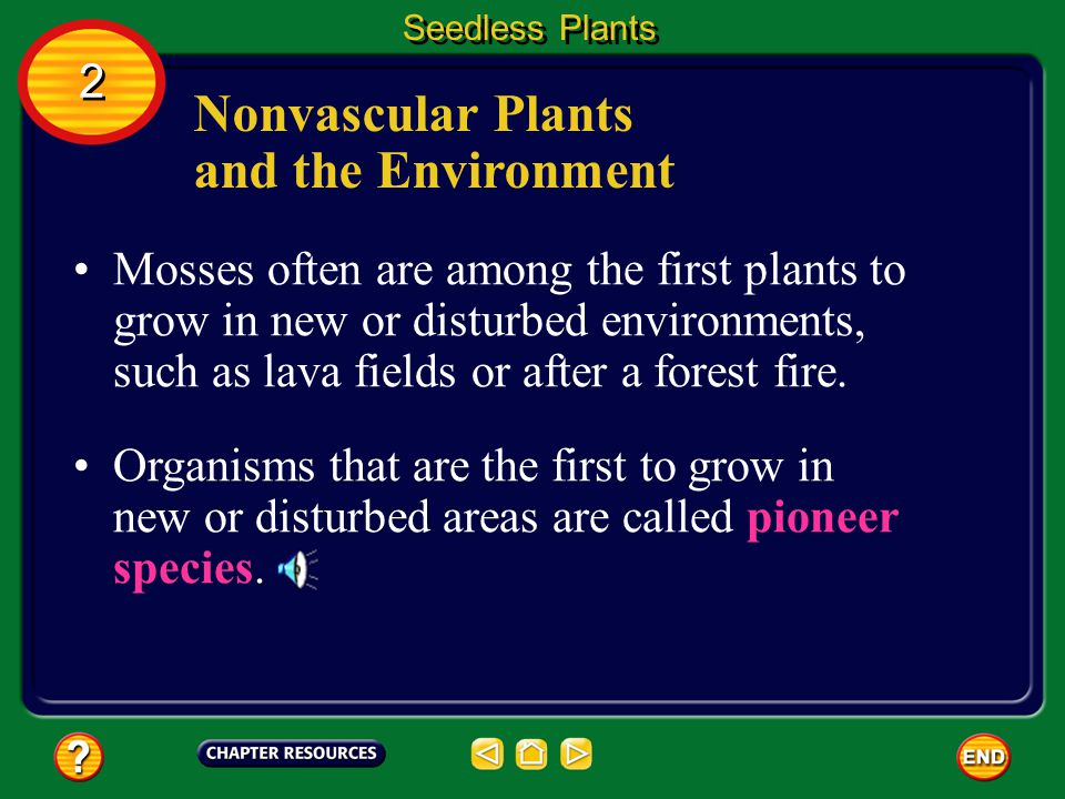 Nonvascular Plants and the Environment Mosses and liverworts are important in the ecology of many areas. They can grow in thin soil and in soils where