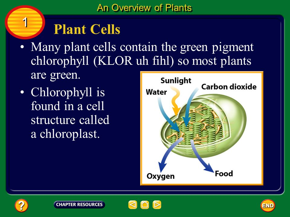 A plant cell has a cell membrane, a nucleus, and other cellular structures. In addition, plant cells have cell walls that provide structure and protec