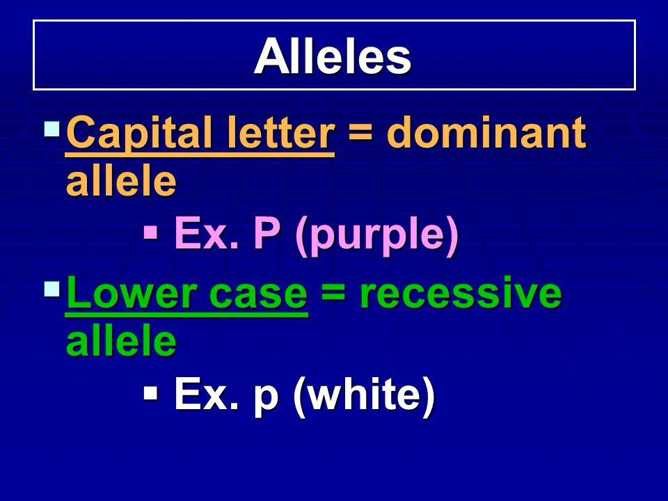 Alleles Capital letter = dominant allele Capital letter = dominant allele Ex. P (purple) Ex. P (purple) Lower case = recessive allele Lower case = rec