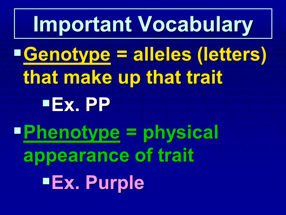 Important Vocabulary Genotype = alleles (letters) that make up that trait Genotype = alleles (letters) that make up that trait Ex. PP Ex. PP Phenotype
