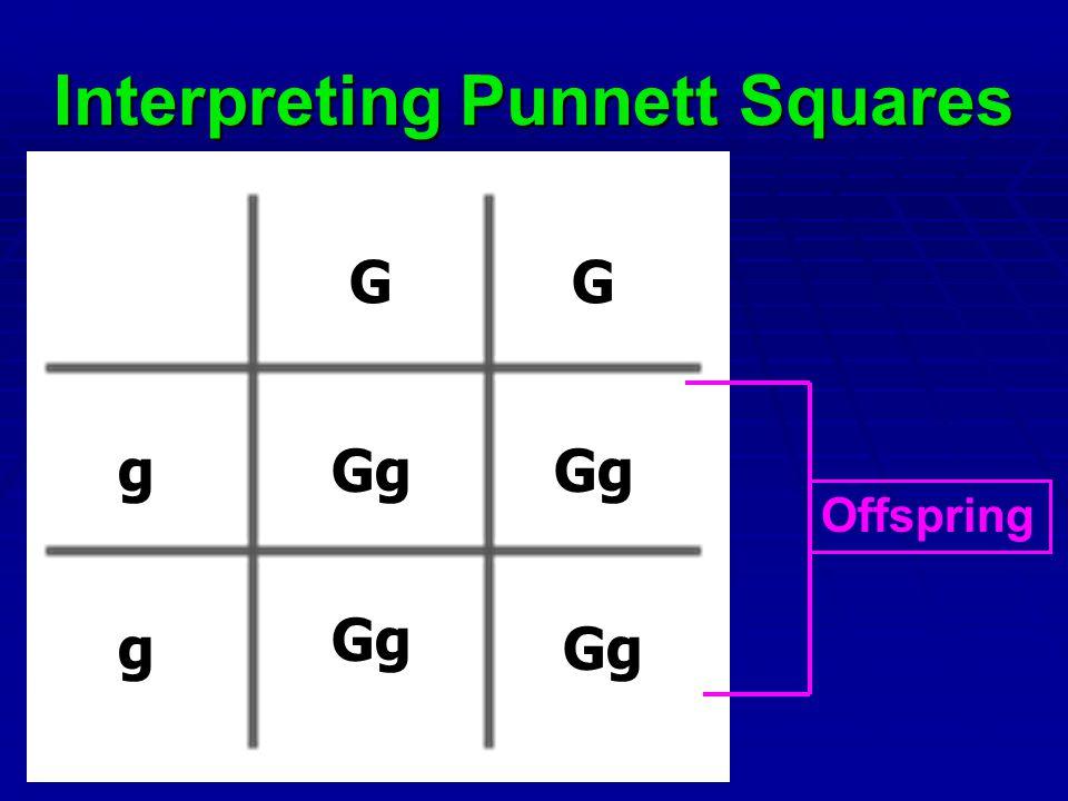 Interpreting Punnett Squares GG g g Gg Offspring