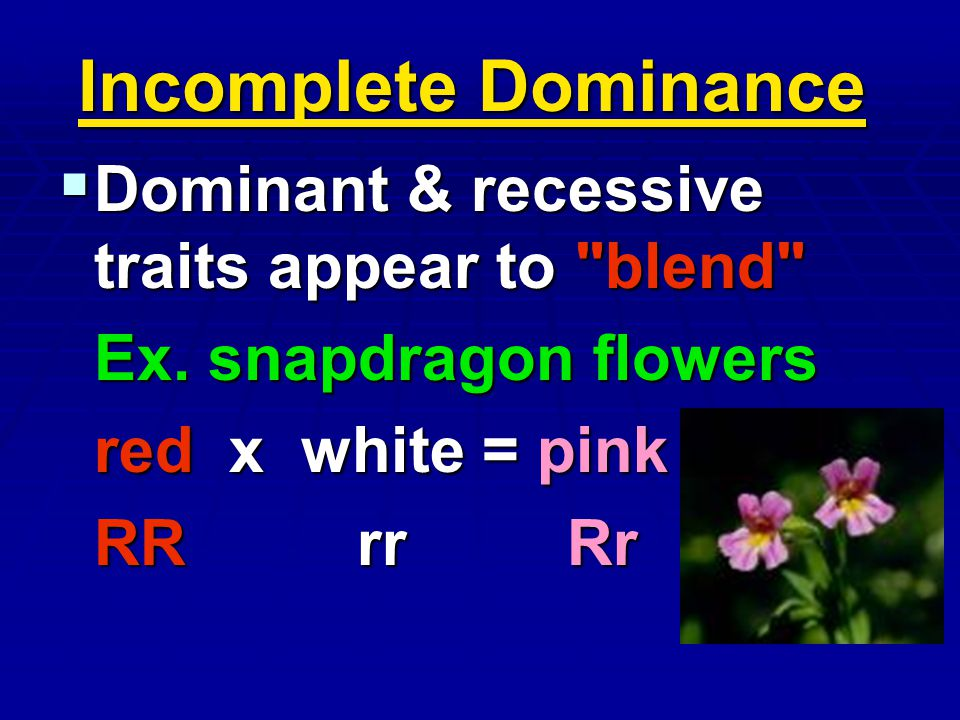 Incomplete Dominance Dominant & recessive traits appear to