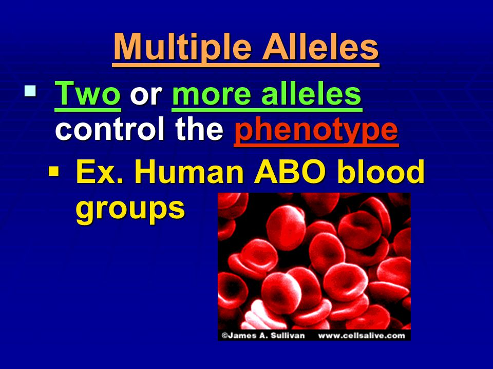Multiple Alleles Two or more alleles control the phenotype Two or more alleles control the phenotype Ex. Human ABO blood groups Ex. Human ABO blood gr