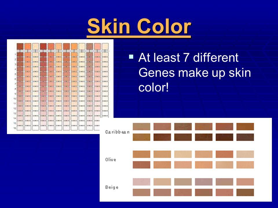 Skin Color At least 7 different Genes make up skin color!
