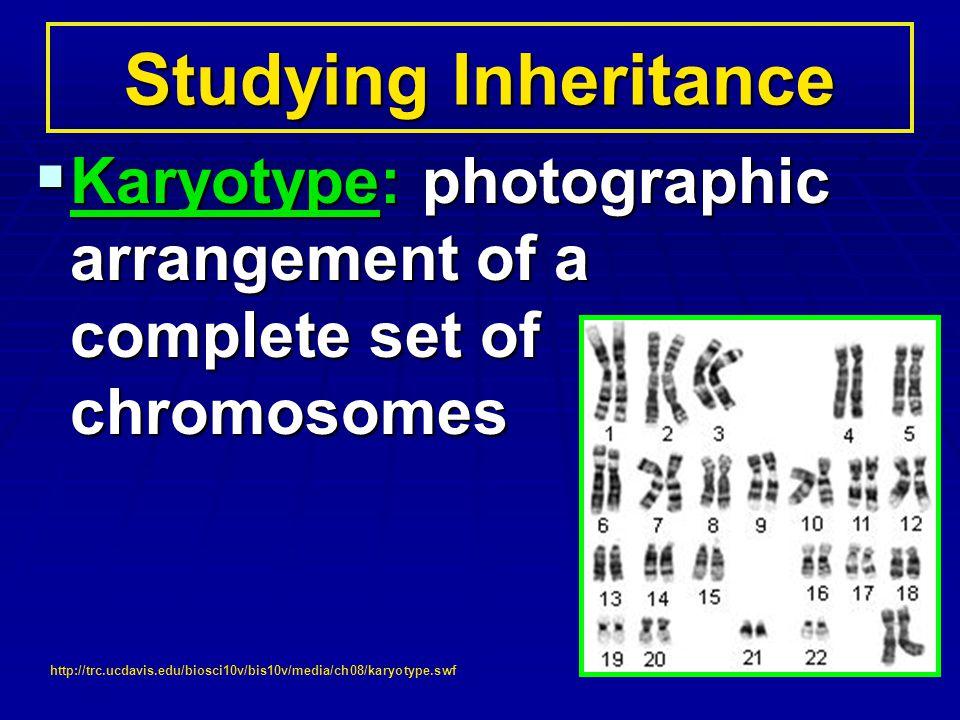 Karyotype: photographic arrangement of a complete set of chromosomes Karyotype: photographic arrangement of a complete set of chromosomes Studying Inh