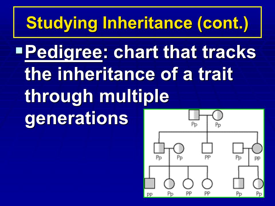 Pedigree: chart that tracks the inheritance of a trait through multiple generations Pedigree: chart that tracks the inheritance of a trait through mul