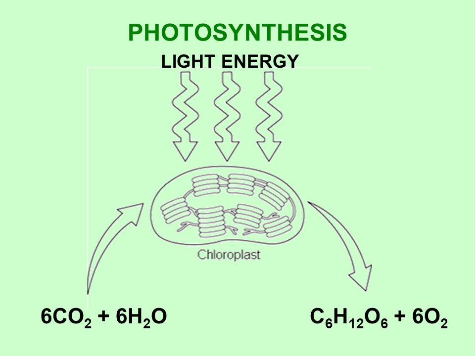 PHOTOSYNTHESIS LIGHT ENERGY 6CO 2 + 6H 2 OC 6 H 12 O 6 + 6O 2