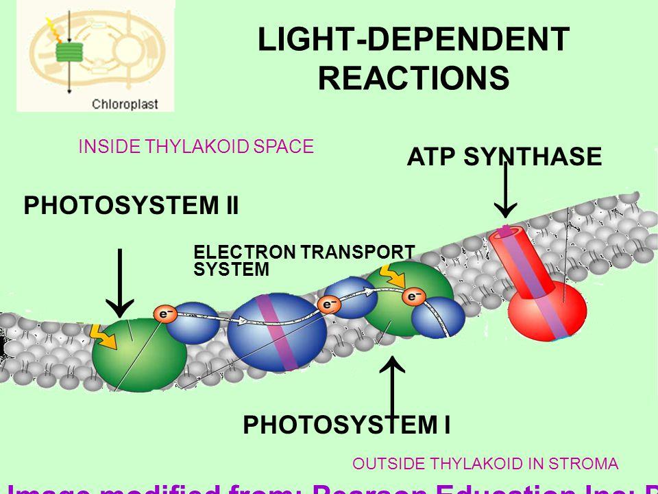 LIGHT-DEPENDENT REACTIONS PHOTOSYSTEM II ATP SYNTHASE PHOTOSYSTEM I ELECTRON TRANSPORT SYSTEM INSIDE THYLAKOID SPACE OUTSIDE THYLAKOID IN STROMA Image