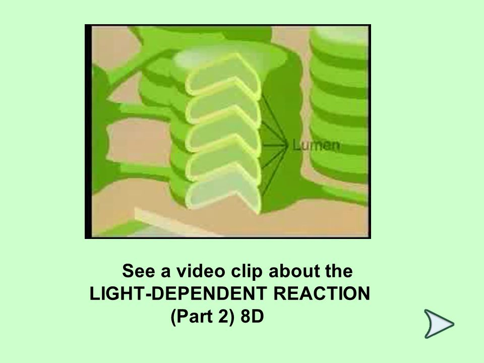 See a video clip about the LIGHT-DEPENDENT REACTION (Part 2) 8D