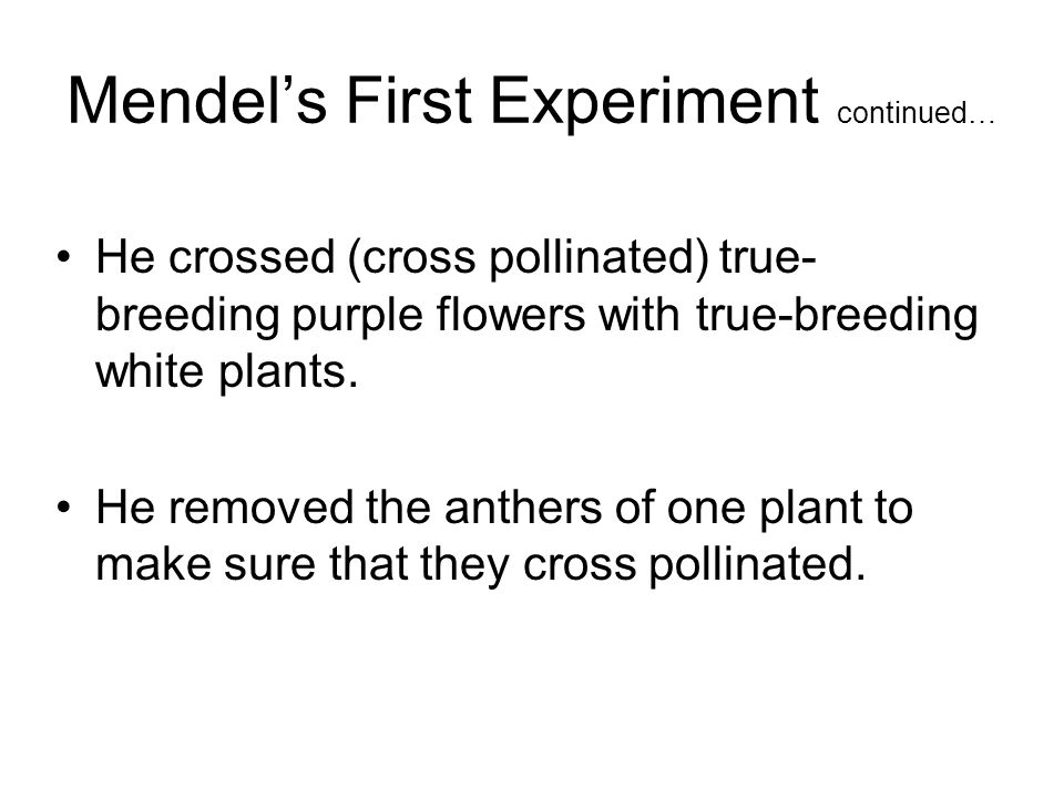 Mendels First Experiment continued… He crossed (cross pollinated) true- breeding purple flowers with true-breeding white plants.