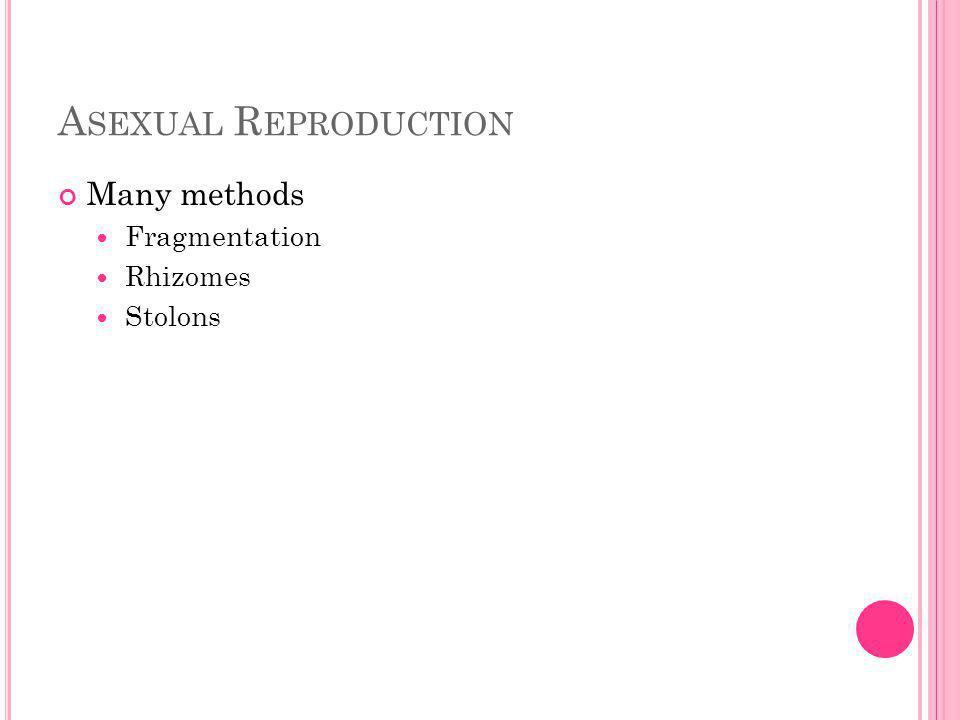 A SEXUAL R EPRODUCTION Many methods Fragmentation Rhizomes Stolons