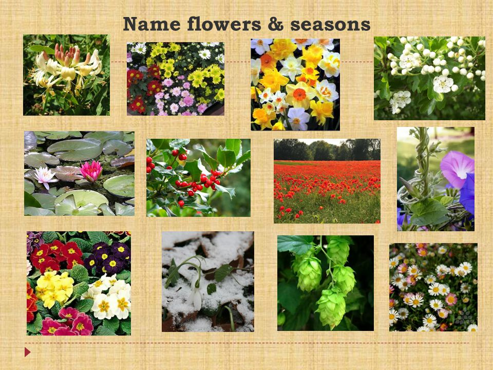 Name flowers & seasons