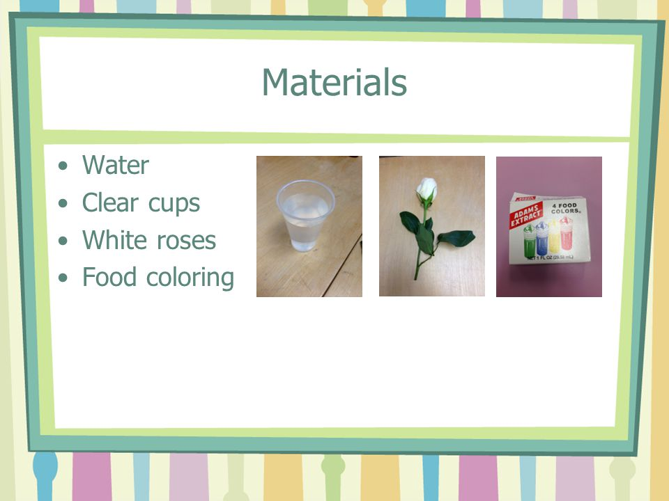 Materials Water Clear cups White roses Food coloring