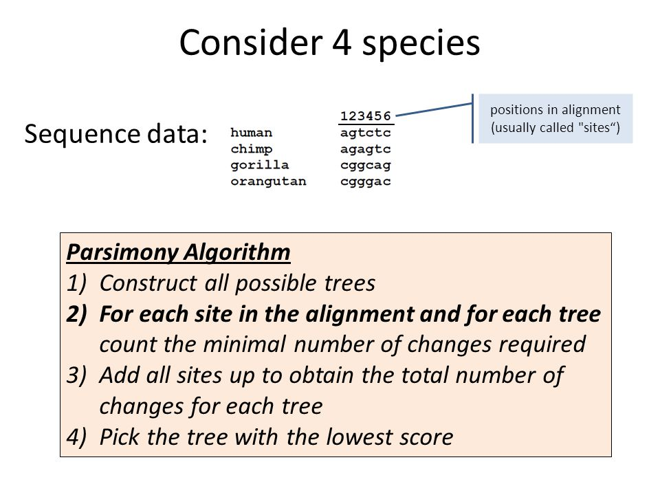 Consider 4 species positions in alignment (usually called sites) Sequence data: Parsimony Algorithm 1)Construct all possible trees 2)For each site in the alignment and for each tree count the minimal number of changes required 3)Add all sites up to obtain the total number of changes for each tree 4)Pick the tree with the lowest score