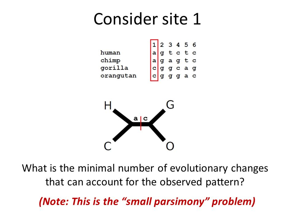 c c a a c c Consider site 1 What is the minimal number of evolutionary changes that can account for the observed pattern.