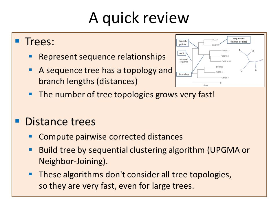 A quick review Trees: Represent sequence relationships A sequence tree has a topology and branch lengths (distances) The number of tree topologies grows very fast.