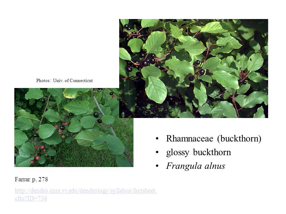 Rhamnaceae (buckthorn) glossy buckthorn Frangula alnus Farrar p. 278 http://dendro.cnre.vt.edu/dendrology/syllabus/factsheet. cfm?ID=738 Photos: Univ.