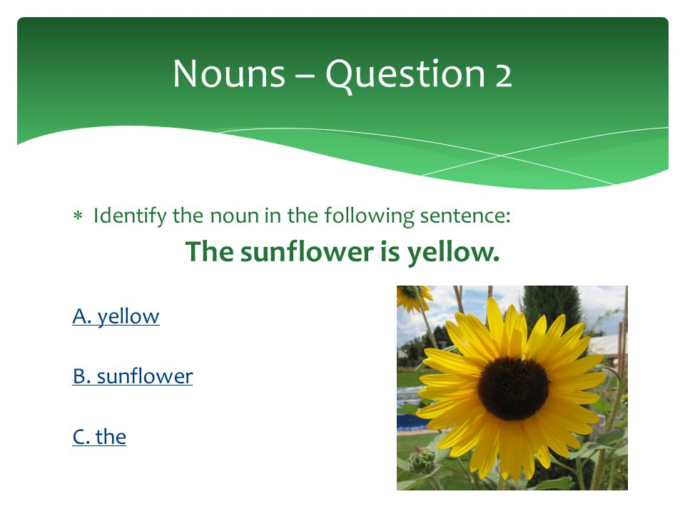Identify the nouns in the following sentence: Two lilies bloomed in the garden.
