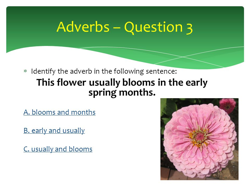 Identify the adverb in the following sentence: The hibiscus flower balances delicately on its stem.