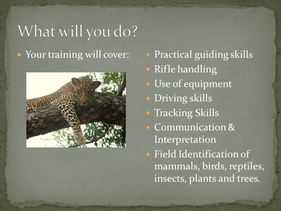 Your training will cover: Practical guiding skills Rifle handling Use of equipment Driving skills Tracking Skills Communication & Interpretation Field Identification of mammals, birds, reptiles, insects, plants and trees.