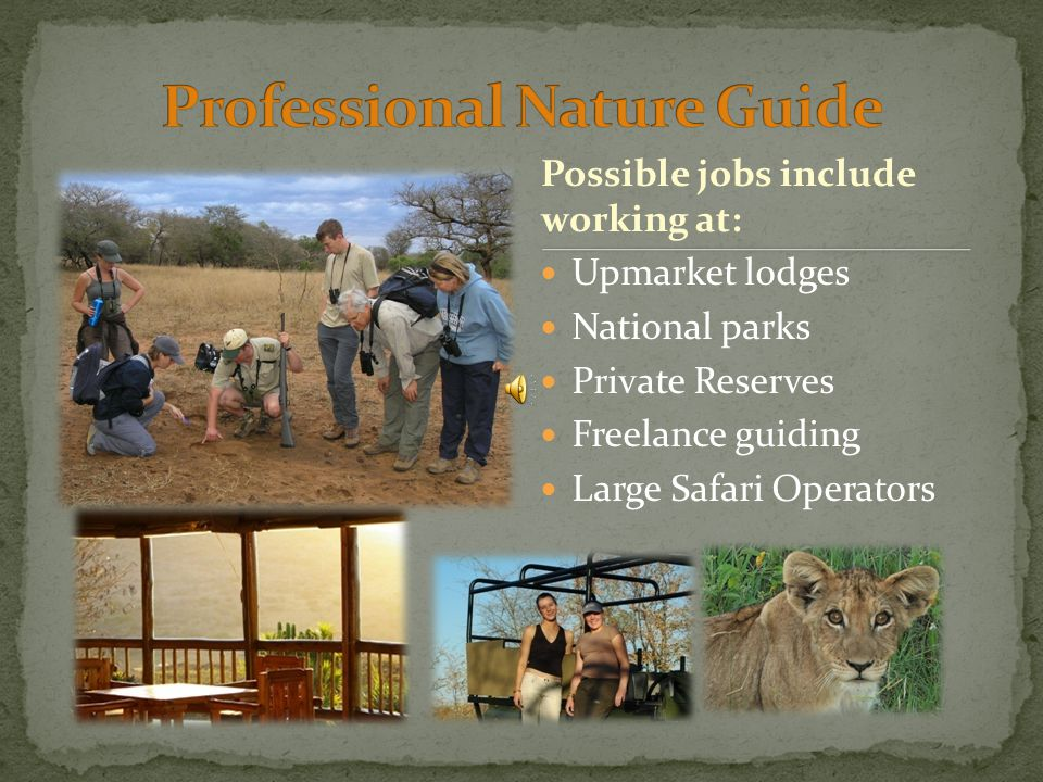 Upmarket lodges National parks Private Reserves Freelance guiding Large Safari Operators Possible jobs include working at:
