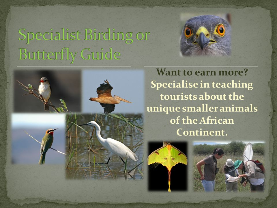 Want to earn more? Specialise in teaching tourists about the unique smaller animals of the African Continent.