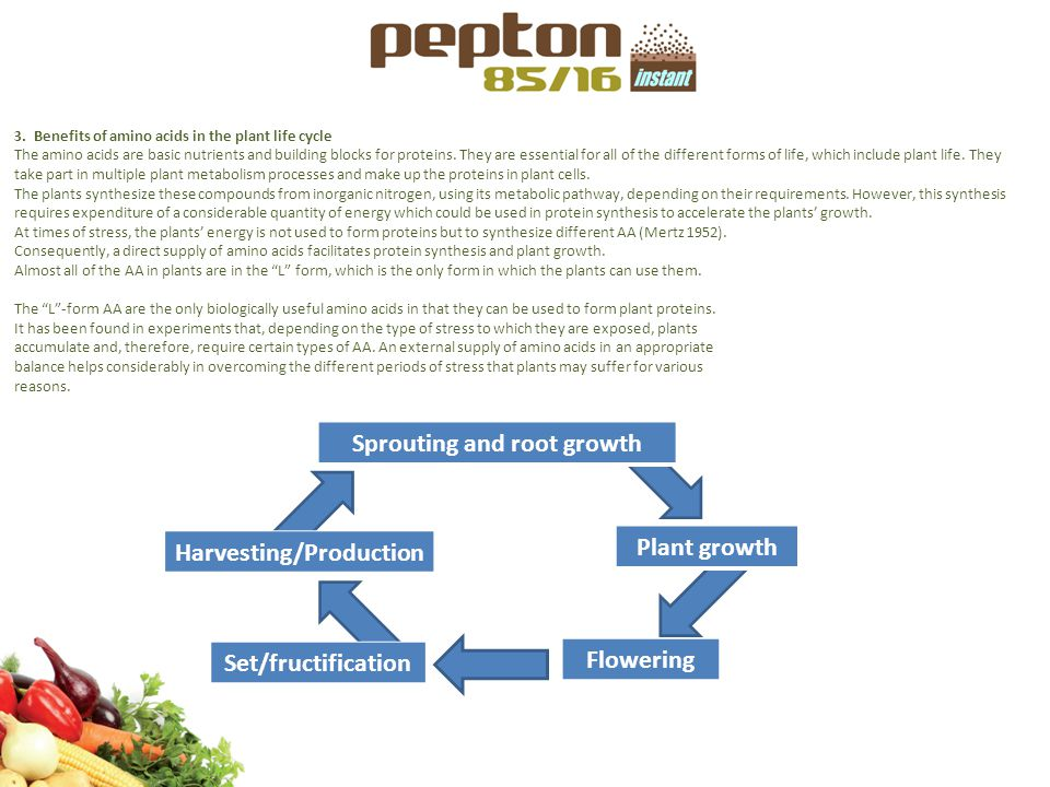 PLANT LIFE CYCLE AND BENEFITS OF PEPTON DURING THE LIFE CYCLE PEPTON promotes initial sprouting and root growth, enabling stronger plant rooting.