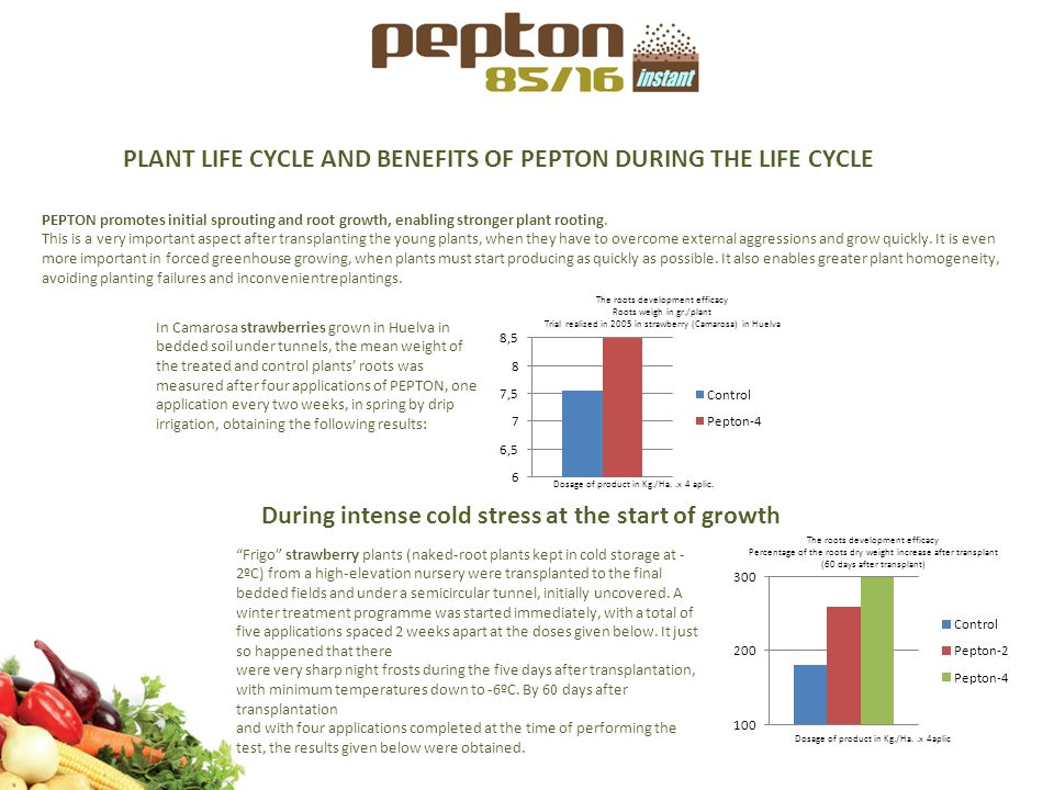 PLANT LIFE CYCLE AND BENEFITS OF PEPTON DURING THE LIFE CYCLE PEPTON promotes initial sprouting and root growth, enabling stronger plant rooting. This