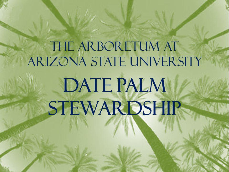 The Arboretum at Arizona State University Date Palm Stewardship