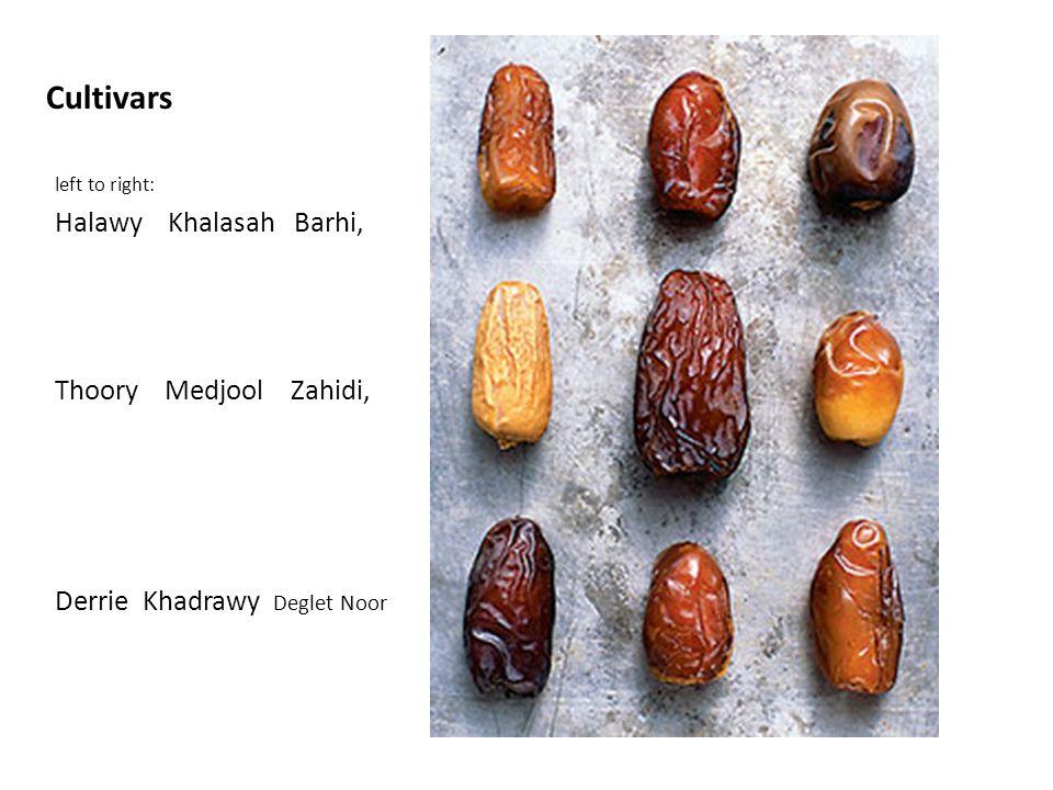Cultivars left to right: Halawy Khalasah Barhi, Thoory Medjool Zahidi, Derrie Khadrawy Deglet Noor