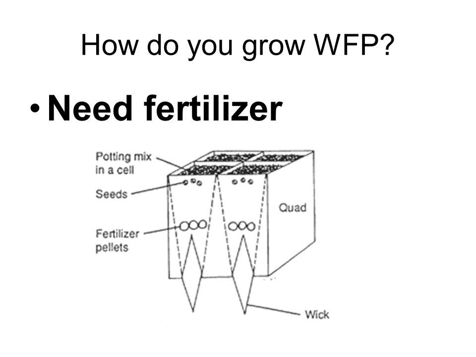 How do you grow WFP? Need fertilizer