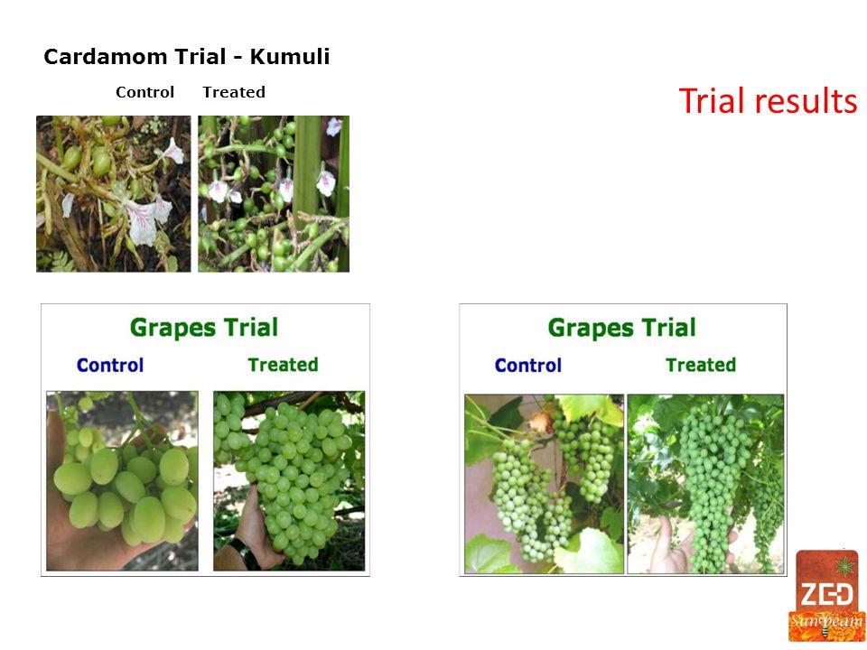 Cardamom Trial - Kumuli ControlTreated
