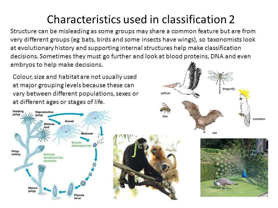 Characteristics used in classification 2 Structure can be misleading as some groups may share a common feature but are from very different groups (eg
