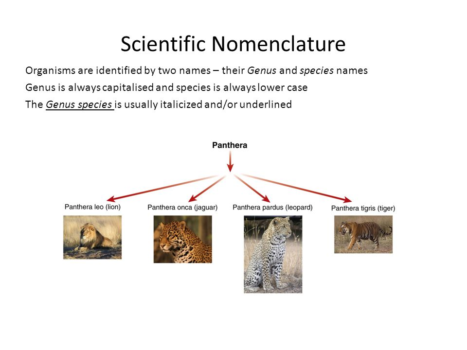 Scientific Nomenclature Organisms are identified by two names – their Genus and species names Genus is always capitalised and species is always lower