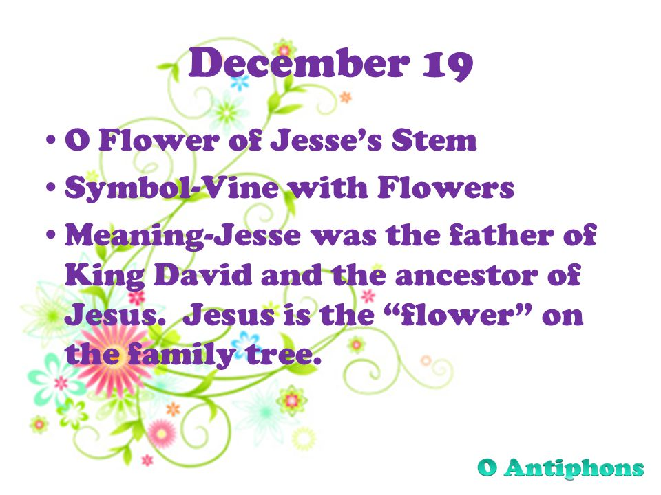 December 19 O Flower of Jesses Stem Symbol-Vine with Flowers Meaning-Jesse was the father of King David and the ancestor of Jesus.