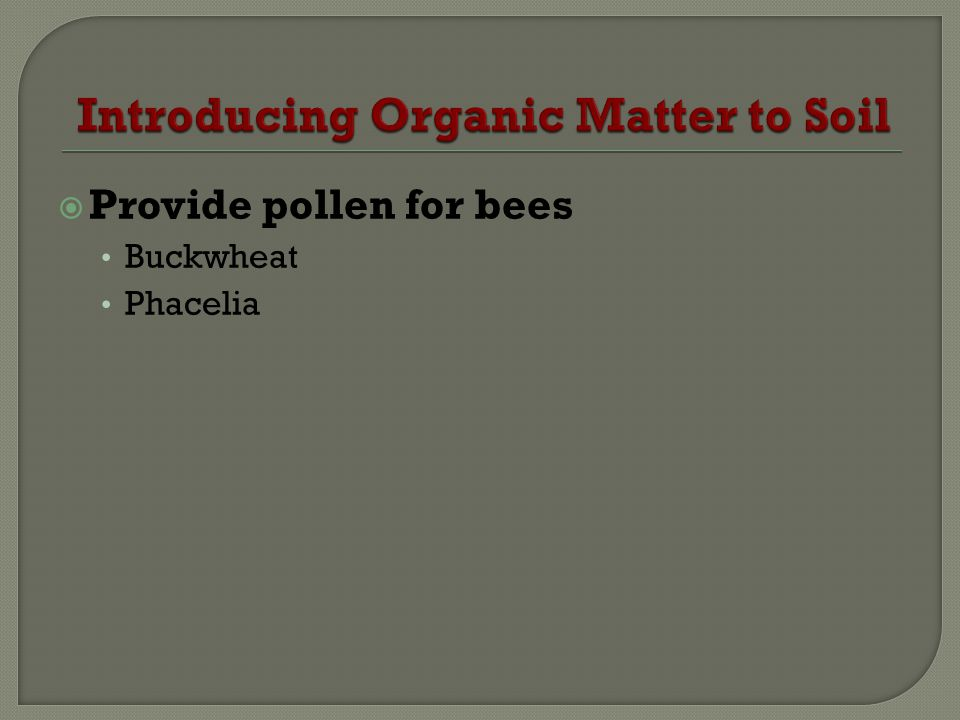 Provide pollen for bees Buckwheat Phacelia